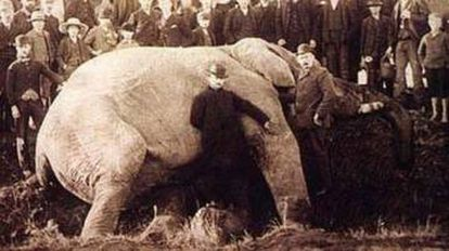 Jumbo, depois da colisão com um trem em setembro de 1885 em St. Thomas, Ontário (Canadá). O animal já estava morto quando a imagem foi feita.