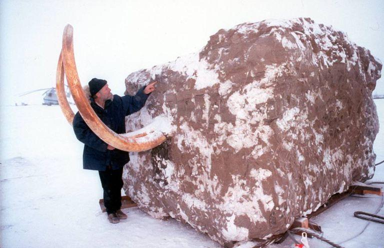 Um explorador examina um bloco de gelo com um mamute no documentário 'Acordando ao mamute'.