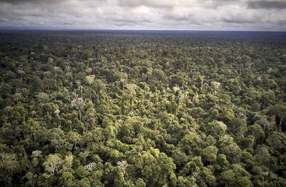 Vista aérea do Território Indígena Maró.