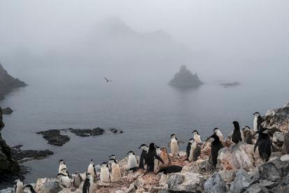 Colônia de pinguins na Low Island, na Antártida.