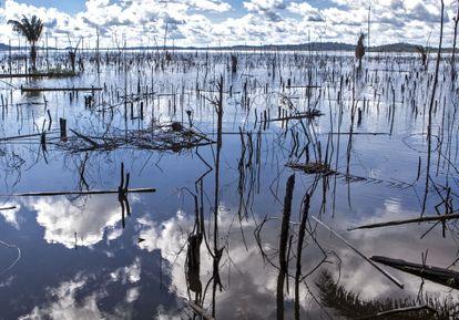 Árvores mortas no rio Xingu.