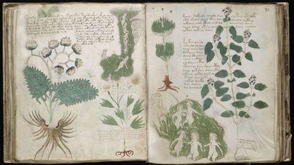 Imagens do 'Códice Voynich'.