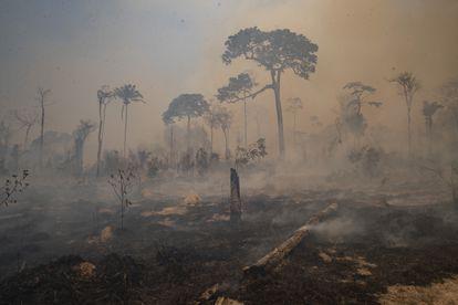 O fogo consumiu a floresta nos arredores de Novo Progresso, no Pará, em 23 de agosto.