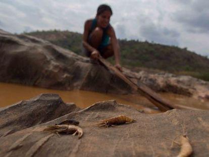 Biólogos e pescadores tentam salvar algumas espécies.