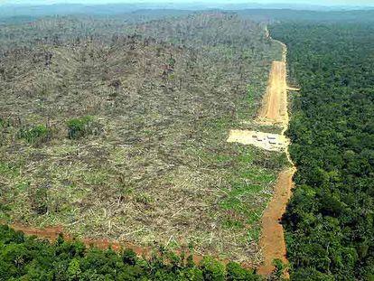 Desmatamento na Amazônia para o plantio de soja, em dezembro de 2019.