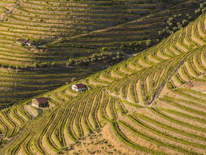 Vinhedos nos arredores de Pinhão, no vale do Alto Duero, declarados patrimônio mundial, em Portugal.
