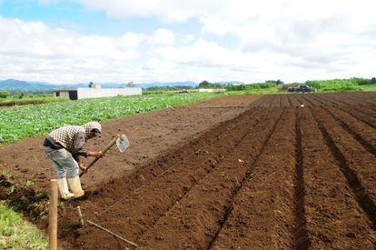 Um agricultor na Guatemala.