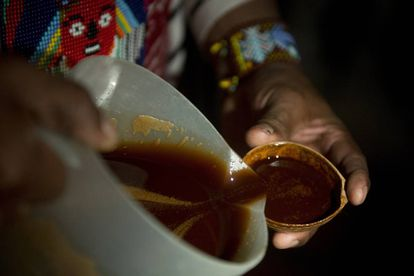 Mistura de ayahuasca sendo servida em um ritual.