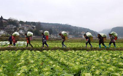 Um grupo de agricultores na província chinesa de Guizhou