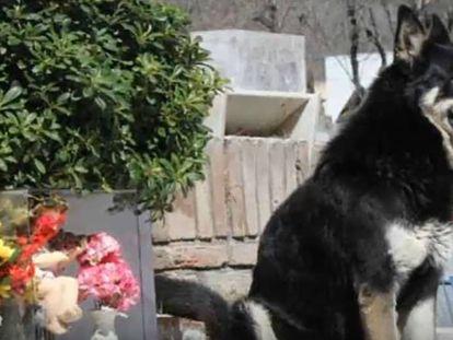 O cachorro Capitán sentado junto ao túmulo do seu dono, em Córdoba (Argentina)