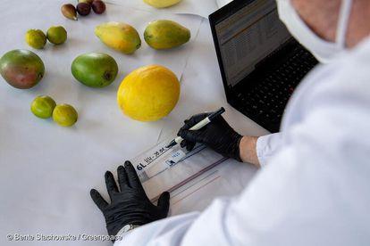 Frutas sendo examinadas durante o teste pelo laboratório alemão.
