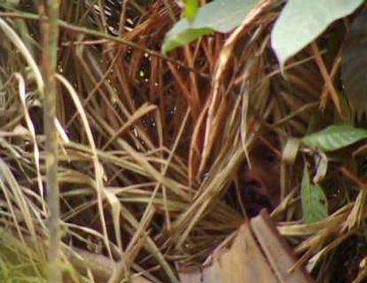 Esta é a única imagem obtida do homem conhecido como Índio do Buraco. Pode-se ver seu rosto entre as folhas.