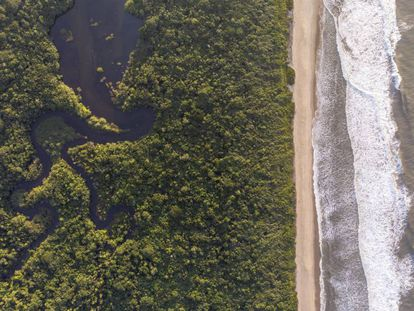 A região do Rio Verde é considerada o coração da Estação Ecológica Jureia-Itatins