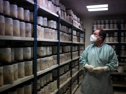 O patologista Alberto Rábano examina cérebros humanos no Banco de Tecidos da Fundação CIEN, em Madri.
