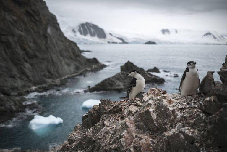Um grupo de pinguins na Antártida em 11 de fevereiro.