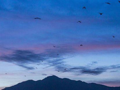 Pássaros voam por Katmandum no Nepal