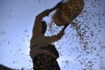 Uma mulher separa grãos de arroz de outros cereais e glumas.