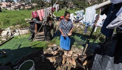 """Idalinda cria quase 50 galinhas em um galinheiro improvisado na beira da represa Billings, no Jardim Monte Verde, Zona Sul de São Paulo. """""""