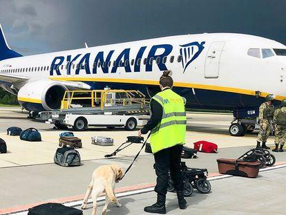 Agentes de segurança usam cão farejador para checar a bagagem dos passageiros do Boing 737 da Ryanair que transportava o oposicionista Roman Protasevich.