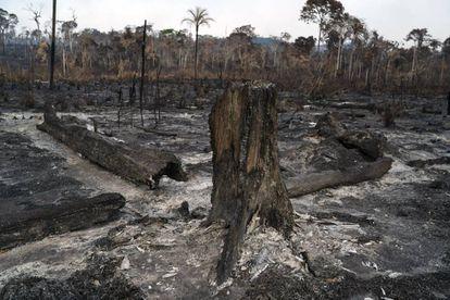 Vegetação destruída após queimadas em Novo Progresso, na região amazônica.