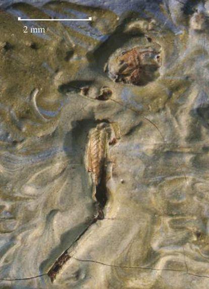 Imagem do gafanhoto achado na obra