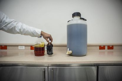 Nos laboratórios são extraídos os derivados da planta, como o óleo de cannabis.