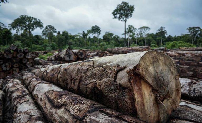 Madeira de extração ilegal apreendida em abril pelo Ibama Terra Indígena (TI) Pirititi, no sul de Roraima.