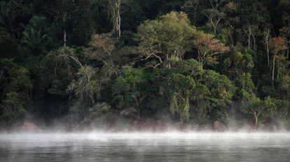 Imagem de um território da floresta amazônica no Pará