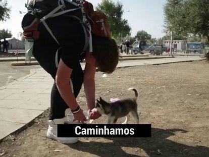 Adolescente sírio percorre 500 quilômetros a pé com seu cachorro