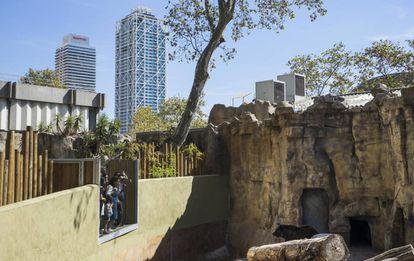 Visitantes do zoológico de Barcelona observam um urso.