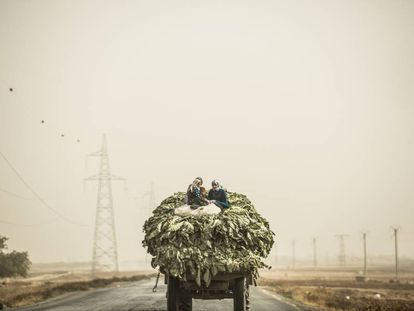 Agricultoras sírias transportan verduras na estrada entre Aleppo e Damasco.