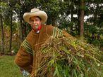El candidato Pedro Castillo retorna a su casa luego de recoger follaje en el campo para sus animales.