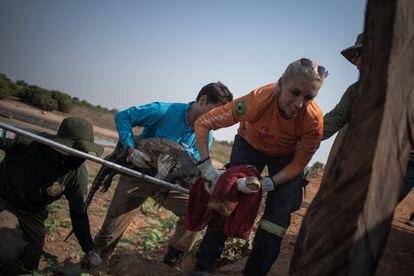 Onze profissionais atuam na captura e no atendimento primário aos animais.