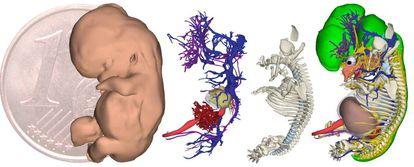 Pele, sistema cardiovascular, esqueleto e órgãos.
