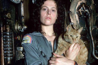 Um dos gatos mais famosos do cinema: Jones, de 'Alien' (Ridley Scott, 1979). Curiosamente, o alienígena atacava os humanos, mas não o felino.
