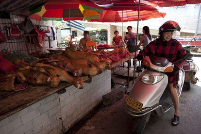 Preparativos do Festival anual da carne de cachorro em Yulin.