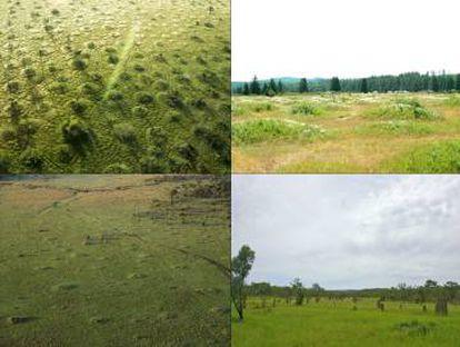 Os pesquisadores aplicaram seu modelo a outros padrões regulares de vegetação. Acima, murundus do Brasil e os mima nos Estados Unidos. Abaixo, termiteiros no Quênia e na Austrália.