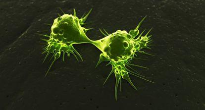 Células tumorais dividindo-se.