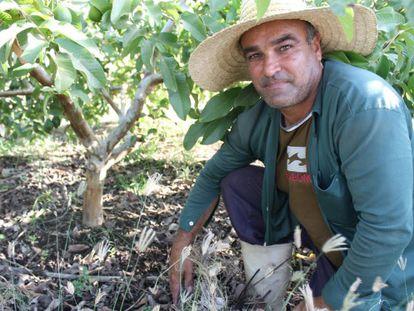 O agricultor Inácio Medeiros em seu cultivo de goiaba de Cruzeta.