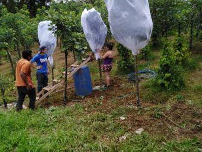 Trabalhadores na produção de larvas.