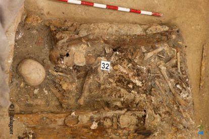 Alguns dos restos analisados.