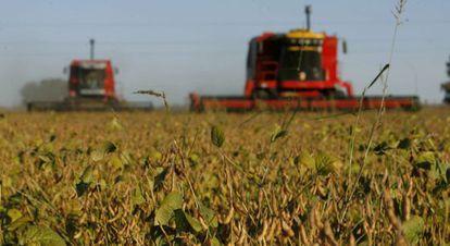 Plantação de soja na Argentina: preço do grão desaba.