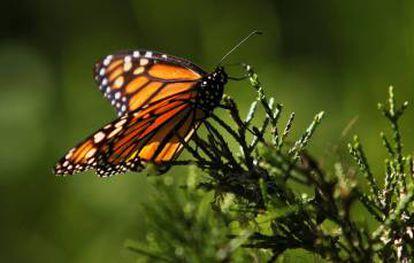 A transformação e a destruição do hábitat é sistematicamente apontada, em todos os estudos, como a principal causa dessa hecatombe.