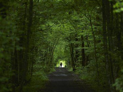Vegetação em bosque europeu.