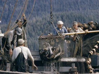 Pescadores colocam em seu barco salmões recém-capturados em Ketchikan, Alasca.