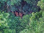 Indígenas aislados del alto del curso del río Humaitá fotografiados en 2016 desde un helicóptero.