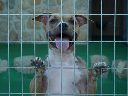 O auge dos hotéis para animais de estimação é o contraponto ao abandono