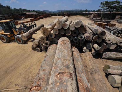 Toras de madeira em área desmatada no Pará.