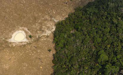 Pedaço de floresta próxima a área usada como pasto perto de Porto Velho, Roraima.