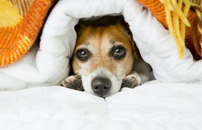 Dilemas modernos: devemos deixar que os cachorros invadem nossos quartos?